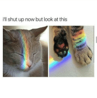 Memes, Shut Up, and Rainbow: ill shut up now but look at this Meet the rainbow cat, keeper of purrfect rainbows~Death —————————————–——— ❤️Follow for more!❤️ ——————————–—————— Admins: 🐱Jess: @they.all.die 💀Death: @killerbookskillerfeels 🍆Eggplant: @edwinwilke.photography 🦄Unicorn: @interweb.posts 🐶Doge: @lotusiaaa ——————————–——