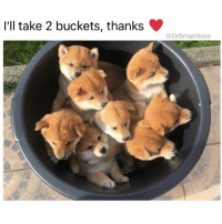 Af, Bless Up, and Cute: I'll take 2 buckets, thanks  @DrSmashlove NOBODY REALLY ADOPTING THIS MANY PUPPIES THEY WHOLE HOUSE GON SMELL LIKE 💩 BUT THIS STILL CUTE AF BLESS UP 😍😂😂😂 (@barrysbanterbus)