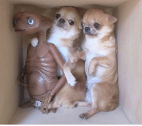 Aliens, Container, and Sneak: Illegal Aliens attempt to sneak into the US found in a storage container, (1982)