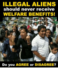 Memes, Aliens, and Never: ILLEGAL ALIENS  should never receive  WELFARE BENEFITS!  Do you AGREE or DISAGREE?