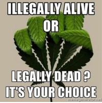 Faced with a tough decision? What would you do? I'd personally rather be illegally alive. ✊️😡🍁🇦🇺 _______________________________________________________ Cannabis CannabisCures EndTheDrugWar MedicalCannabis MagicalButterAustralia MagicalButter CannabisCommunity AussieStoners AussieCannabisCommunity 420 420Australia EatToTreat Medibles NZStoners Hightimes StayElevatedAustralia Weedstagram Medicated AussieGreenery HighSociety WeedPorn Legalize w420 MedicalCannabis MedicalCannabisAustralia 420photograph StonerSloth AustralianHempParty THCCuresCancer ______________________________________________________ MagicalButter.com.au MagicalButter.co.nz 1800 420 420: ILLEGALLY ALIVE  OR  LEGALLY DEAD  ITS  YOUR CHOICE  meme generator net Faced with a tough decision? What would you do? I'd personally rather be illegally alive. ✊️😡🍁🇦🇺 _______________________________________________________ Cannabis CannabisCures EndTheDrugWar MedicalCannabis MagicalButterAustralia MagicalButter CannabisCommunity AussieStoners AussieCannabisCommunity 420 420Australia EatToTreat Medibles NZStoners Hightimes StayElevatedAustralia Weedstagram Medicated AussieGreenery HighSociety WeedPorn Legalize w420 MedicalCannabis MedicalCannabisAustralia 420photograph StonerSloth AustralianHempParty THCCuresCancer ______________________________________________________ MagicalButter.com.au MagicalButter.co.nz 1800 420 420