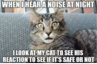 Memes, 🤖, and Cat: ILOOK AT MY CAT TO SEE HIS  REACTION TO SEE IFITS SAFE OR NOT
