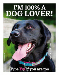dog lovers: I'M 100% A  DOG LOVER!  ype Y if you are too