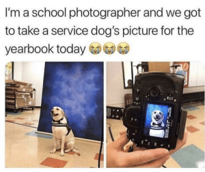 Dogs, School, and Today: I'm a school photographer and we got  to take a service dog's picture for the  yearbook today  0 Service Dog For Yearbook