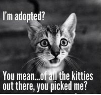 Cute, Kitties, and Memes: I'm adopted?  You mean..ofail the kitties  out there, you picked me? For more cute cat pics LIKE us at The Purrfect Feline Page
