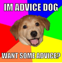IM ADVICE DOG  WANT SOME ADVICE