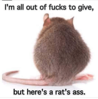 I try not to But sometimes it does feel good: I'm all out of fucks to give,  but here's a rat's ass. I try not to But sometimes it does feel good