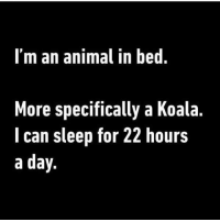 Memes, 🤖, and Koala: I'm an animal in bed  More specifically a Koala  I can sleep for 22 hours  a day. 🐨🐨🐨🐨 @shekeepsmebalanced