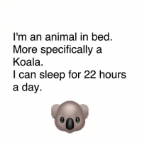 Memes, 🤖, and Koala: I'm an animal in bed  More specifically a  Koala  I can sleep for 22 hours  a day 😂😂