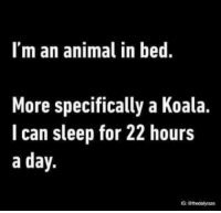 Koalaing: I'm an animal in bed.  More specifically a Koala.  I can sleep for 22 hours  a day.  G: @thedailyraze