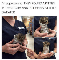 Cute, Petco, and Her: I'm at petco and THEY FOUND A KITTEN  IN THE STORM AND PUT HER IN A LITTLE  SWEATER <p>So smoll and cute</p>