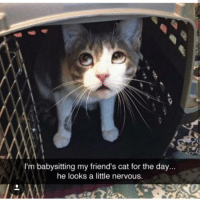 Friends, Memes, and 🤖: I'm babysitting my friend's cat for the day...  he looks a little nervous.