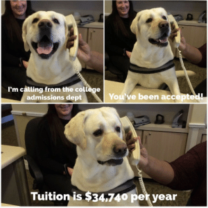 Confused doggo noises: I'm calling from the college  admissions dept  You've been accepted!  Tuition is $34,740 per year Confused doggo noises