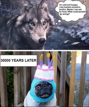 Pug of cake: I'm cold and hungry.  I see humans around a  bonfire. Maybe I can ask  for food. What could possibly  go wrong?  30000 YEARS LATER Pug of cake