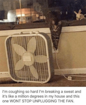 Memes, My House, and House: I'm coughing so hard I'm breaking a sweat and  it's like a million degrees in my house and this  one WONT STOP UNPLUGGING THE FAN.