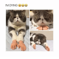 In Soviet Russia, YOU do not pet the cat. The cat pets you . . me meme memes memesdaily memesaremydreams tumblr tumblrtextpost tumblrfunny tumblraccount textpost textposts textpostaccount textposttumblr textpostfunny tumblrgirl creamurtartar ifunny same relatable relatablepost relatablequote cat catchthesehands cats: I'M DYING In Soviet Russia, YOU do not pet the cat. The cat pets you . . me meme memes memesdaily memesaremydreams tumblr tumblrtextpost tumblrfunny tumblraccount textpost textposts textpostaccount textposttumblr textpostfunny tumblrgirl creamurtartar ifunny same relatable relatablepost relatablequote cat catchthesehands cats