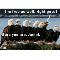 Happy memorial day!!! Mame america great again: I'm free as well, right guys?  Sure you are, Jamal. Happy memorial day!!! Mame america great again