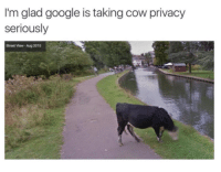 Gøogle: I'm glad google is taking cow privacy  seriously  Street View-Aug 2015