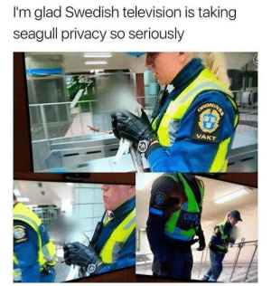 Meirl by DarkStar42024 MORE MEMES: I'm glad Swedish television is taking  seagull privacy so seriously  SARONING  VAKT  OR Meirl by DarkStar42024 MORE MEMES