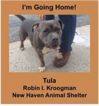 I'm Going Home!  Tula  Robin I. Kroogman  New Haven Animal Shelter Lovely TULA was adopted last week to a couple who first met her at our Bishop's Orchards adoption event. She will be going to her new home tomorrow - happy tails, Tula!  #GMAPAWdoption #getyourrescueon