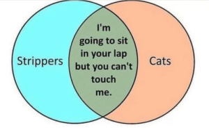 Cats, Strippers, and True: I'm  going to sit  in your lap  Strippers but you can't  Cats  touch  me. Its true