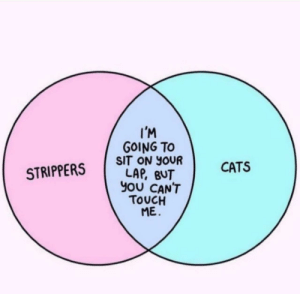 Cats, Shit, and Strippers: I'M  GOING TO  SIT ON YOUR  STRIPPERS LAP, BUT  CATS  YOU CANT  TOUCH  ME. What a bunch of shit