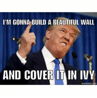 I'M GONNA BUILD A BEAUTIFUL WALL  AND COVER ITAIN IVY  mematic net If Donald Trump were a Cubs fan...
