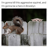 Funny, Brooklyn, and Squirrel: I'm gonna kill this aggressive squirrel, and  I'm gonna be a hero in Brooklyn It's handled aggressivesquirrel