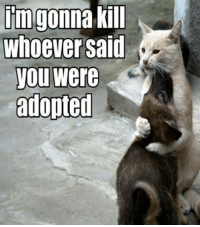 Cats, Dogs, and Funny: im gonna kill  whoever said  you were  adopted Funny Dog and Cat Pictures with Caption
