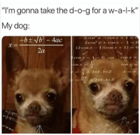 "Memes, 🤖, and Dog: ""I'm gonna take the d-o-g for a w-a-l-k""  My dog:  (2 cos ar  2a  Di"