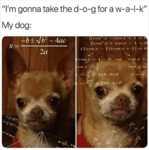 "Memes, 🤖, and Dog: ""I'm gonna take the d-o-g for a w-a-l-k  My dog:  -bt Nb-4ac  NOOZ  2 coN  (2 cos 1)(cor+  2a  or  2nk keZ  2xk. kez  3"