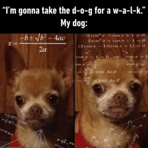 "Dank, 🤖, and Dog: ""I'm gonna take the d-o-g for a w-a-l-k.""  My dog:  -bt Nb- 4ac  2 c  2 cos  (2 coN 1)(cON 1)  CON  = x  2a  or  CO  COS  ON  2xk. keZ  27k. keZ  .0  B Where did you put the t-r-e-a-t?"