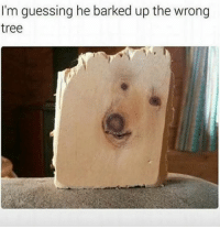 Ha punny. (@dankmemes.m9): I'm guessing he barked up the wrong  tree Ha punny. (@dankmemes.m9)