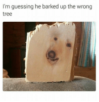 - Trending Memes: I'm guessing he barked up the wrong  tree - Trending Memes