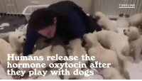 One for the dog loving introverts!: IM GUR  Humans release the  hormone oxytocin after  they play with dogs  TIMELINE One for the dog loving introverts!
