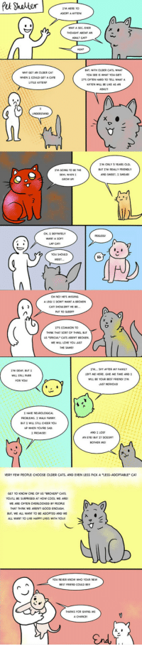 """Be Like, Cats, and Cute: I'M HERE TO  ADOPT A KITTEN  WAIT A SEC. EVER  THOUGHT ABOUT AN  ADULT CAT?  WHY GET AN OLDER CAT  WHENェCOULD GET A CUTE  LITTLE KITTEN  BT, WITH OLDER CATS, WHAT  YOU SEE IS WHAT YOU GET  IT'S OFTEN HARD TO TELL WHAT A  KITTEN WILL BE LIKE AS AN  ADULTI  NDERSTAND  I'M GOING TO BE THE  DEVIL WHEN I  GROW LP  I'M ONLY 3 YEARS OLD  BUT I'M REALLY FRIENDLY  AND SWEET, I SWEAR  K,I DEFINITELY  WANT A SOFT  LAP CAT  PEGLEG!  YOU SHOLLD  Hi  MEET.  OH NO! HE'S ISSING  A LEGI I DON'T WANT A BROKEN  CATI SHOLL ON'T HE BE  PLT TO SLEEP?  IT'S COMMON TO  HONK THAT SORT OF THING, BU  US """"SPECIAL CATS ARENT EROKEN.  WE WLL LOVE YOU JUST  THE SAME  I'M... SHY AFTER MY FAMILY  EFT ME HERE. GIVE ME TIME AND I  WILL BE YOUR BEST FRIENDII'  UST NERVYOUS  I'M DEAF, BUT  WILL STIL PURR  FOR YO  I HAVE NEUROLOGICAL  PROBLEMS. I WALK FUNNY  BHT I WILL STILL CHEER YOu  UP WHEN YOU'RE SAD  I PROMISE  AND I LOST  AN EYE, BUT IT DOESNT  BOTHER ME  VERY FEW PEOPLE CHOOSE OLDER CATS, AND EVEN LESS PICK A """"LESS-ADOPTABLE"""" CA  GET TO KNOW ONE OF US BROKEN"""" CATS  YOULL BE SURPRISED AT HOW COOL WE ARE  WE ARE OFTEN OVERLOOKED BY PEOPLE  THAT THINK WE ARENT GOOD ENOUGH  BUT, WE ALL WANT TO BE ADOPTED AND WE  ALL WANT TO LIVE HAPPY LIVES WITH YOU  YOU NEVER KNOW WHO YOUR NEWW  BEST FR ND COULD BE  THANKS FOR GIVING ME  A CHANCE <p>Something To Consider About Pet Shelters</p>"""