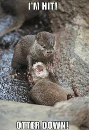 When you mate goes down (fortnite battle royal) by lozw993 FOLLOW 4 MORE MEMES.: I'M HIT!  OTTER DOWN! When you mate goes down (fortnite battle royal) by lozw993 FOLLOW 4 MORE MEMES.