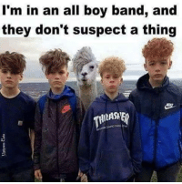 Band alpacas!!: I'm in an all boy band, and  they don't suspect a thing Band alpacas!!