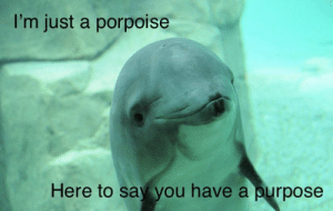 https://t.co/NuZRukYJt1: I'm just a porpoise  Here to say you have a purpose https://t.co/NuZRukYJt1