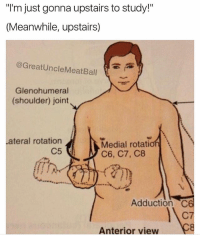 """Memes, Break, and 🤖: """"I'm just gonna upstairs to study!""""  (Meanwhile, upstairs)  @GreatUncleMeatBall  Glenohumeral  (shoulder) joint  ateral rotation  C5  Medial rotation  C6, C7, C8  Adduction C6  C7  Anterior view Study break (Follow @greatunclemeatball )"""