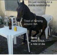 @areuoffended knows this feel: I'm just looking for a  stable relationship  Tired of horsing  red oft  around tbh  Need  mane chick,  a ride or die @areuoffended knows this feel