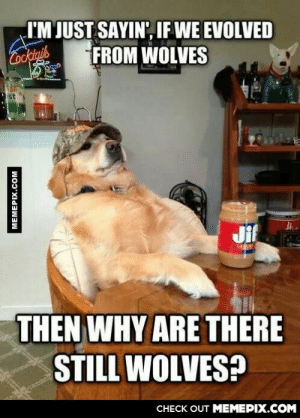 We need more of theseomg-humor.tumblr.com: I'M JUST SAYIN', IF WE EVOLVED  Cooktnis  FROM WOLVES  Jif  THEN WHY ARE THERE  STILL WOLVES?  CHECK OUT MEMEPIX.COM  MEMEPIX.COM We need more of theseomg-humor.tumblr.com