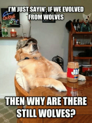 srsfunny:Redneck Retriever Ain't Having None Of Your Evolution Crap: I'M JUST SAYIN, IF WE EVOLVED  FROM WOLVES  st  THEN WHY ARE THERE  STILL WOLVES? srsfunny:Redneck Retriever Ain't Having None Of Your Evolution Crap