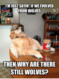 If they evolved from wolves, can you say that they... EWOLVED?: I'M JUST SAYIN IF WEEVOLVED  FROM WOLVES  Jif  THEN WHY ARE THERE  STILL WOLVES? If they evolved from wolves, can you say that they... EWOLVED?
