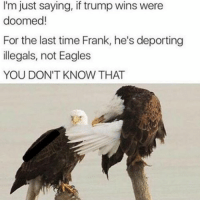 Philadelphia Eagles, Meme, and Memes: I'm just saying, if trump wins were  doomed!  For the last time Frank, he's deporting  illegals, not Eagles  YOU DON'T KNOW THAT Dont get triggered its just a meme 😂🦅, smash that like for this amazing pun 👊♥️