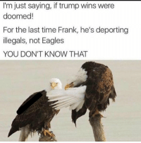 Who makes this stuff?! 😩😂: I'm just saying, if trump wins were  doomed!  For the last time Frank, he's deporting  illegals, not Eagles  YOU DON'T KNOW THAT Who makes this stuff?! 😩😂