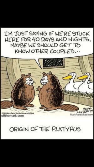 The origin of the platypus: IM JUST SAYING IF WERE STUCK  HERE FOR 40 DAYS AND NIGHTS,  MAYBE WE SHOULD GET TO  KNOW OTHER COUPLES..  MARK  7-24 FAR71  MarkParisiacl.com  pMaPr Dty tieal UCi  offthemark.com  ORIGIN OF THE PLATYPUS The origin of the platypus