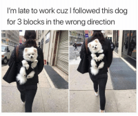 Work, Dog, and For: I'm late to work cuz I followed this dog  for 3 blocks in the wrong direction