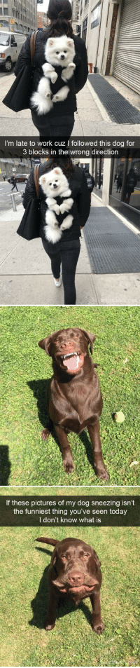 Target, Tumblr, and Work: I'm late to work cuz I followed this dog for  3 blocks in the wrong direction   If these pictures of my dog sneezing isn't  the funniest thing you've seen today  I don't know what is animalsnaps:Doggo snaps