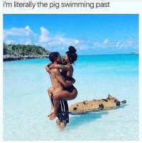 Pigly: i'm literally the pig swimming past